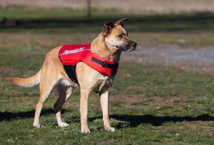 Canine Flotation Device - Medium